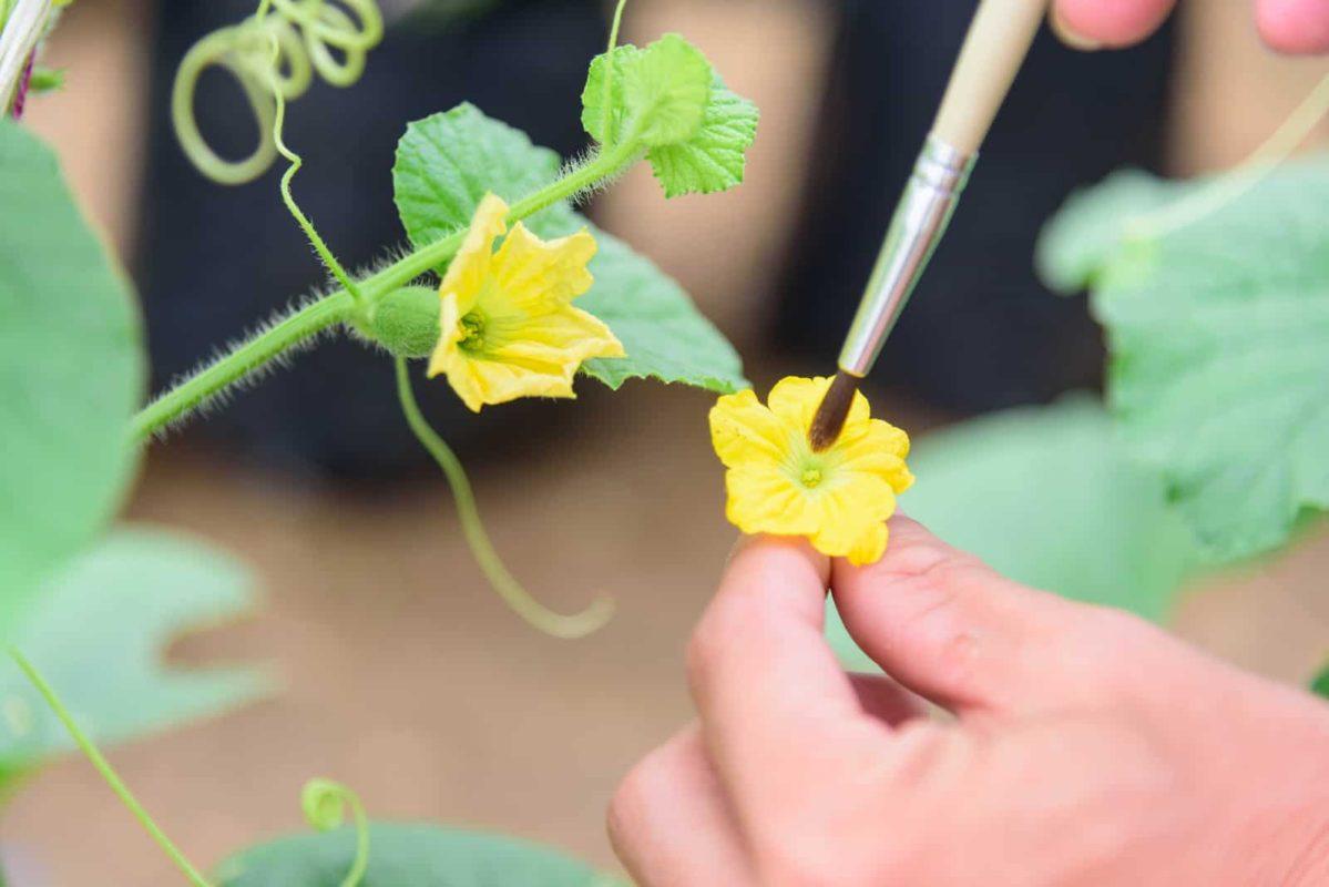 Domestic Pollination Program